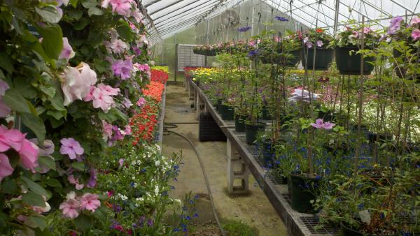 Town Farm Landscape Greenhouse