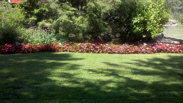 backyard mowed lawn with flower bed