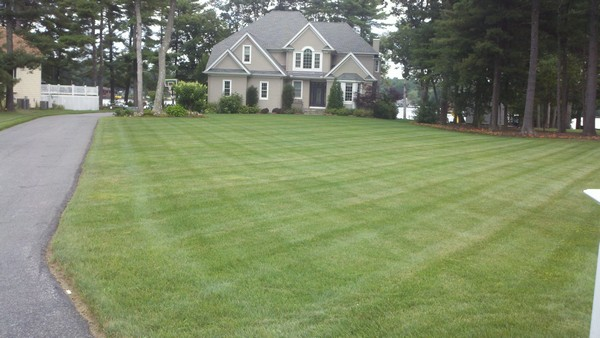 mowed front lawn